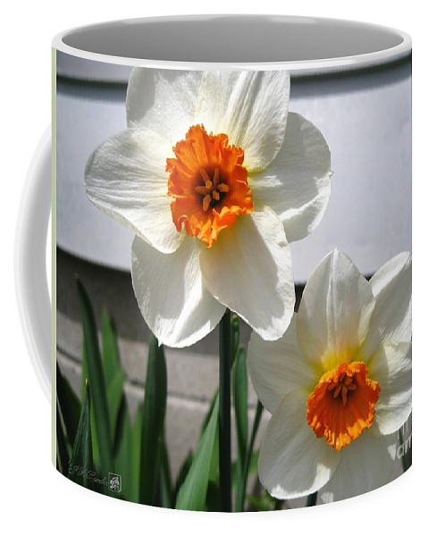 Mccombie Coffee Mug featuring the photograph Small-cupped Daffodil Named Barrett Browning by J McCombie
