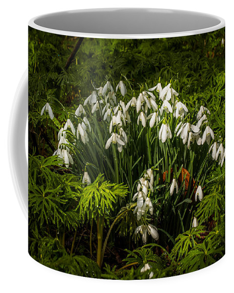 Berkshire Coffee Mug featuring the photograph Snowdrop Woods by Mark Llewellyn