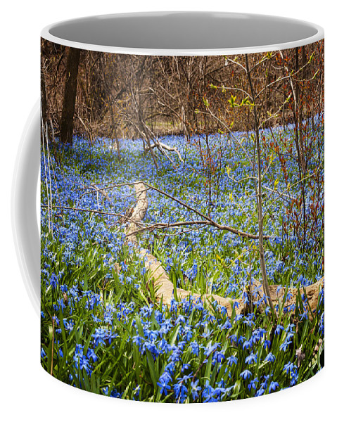 Flowers Coffee Mug featuring the photograph Spring Blue Flowers Wood Squill by Elena Elisseeva