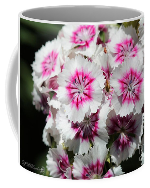 Mccombie Coffee Mug featuring the photograph Sweet William From The Super Duplex Bluepoint Mix by J McCombie