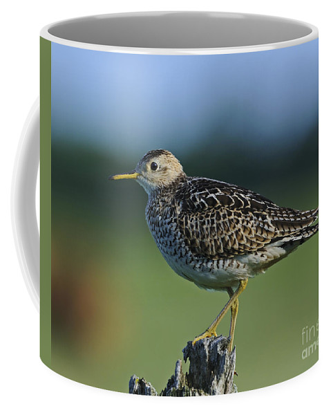 Upland Sandpiper Coffee Mug featuring the photograph Upland Sandpiper.. by Nina Stavlund