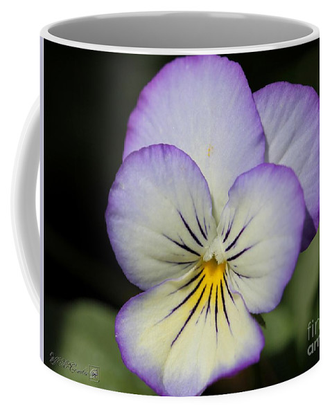 Mccombie Coffee Mug featuring the photograph Viola Named Sorbet Lemon Blueberry Swirl by J McCombie