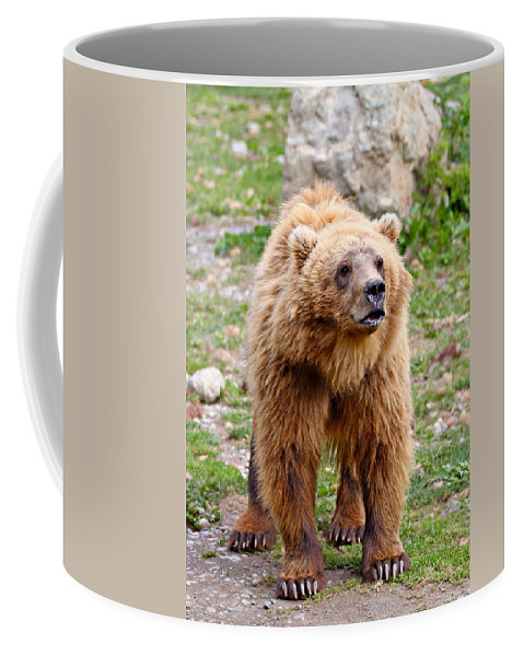Animal Coffee Mug featuring the photograph Brown Bear by Paul Fell