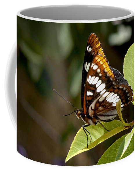 Butterfly Coffee Mug featuring the photograph Butterfly by Betty Depee