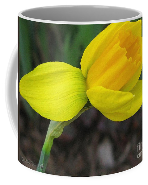 Mccombie Coffee Mug featuring the painting Dwarf Cyclamineus Daffodil Named Jet Fire by J McCombie