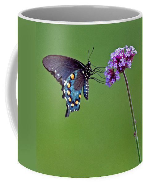 Butterfly Coffee Mug featuring the photograph Pipevine Swallowtail Butterfly by Karen Adams