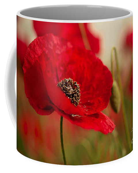 Poppy Coffee Mug featuring the photograph Poppy Dream by Nailia Schwarz