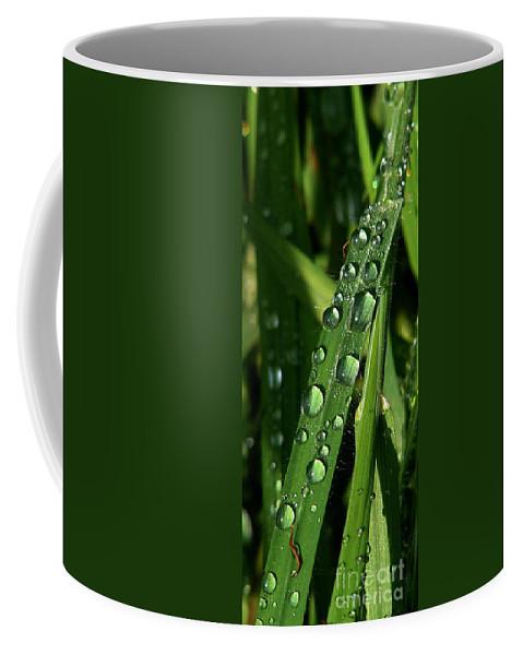 Rain Coffee Mug featuring the photograph Raindrops by Carol Lynch