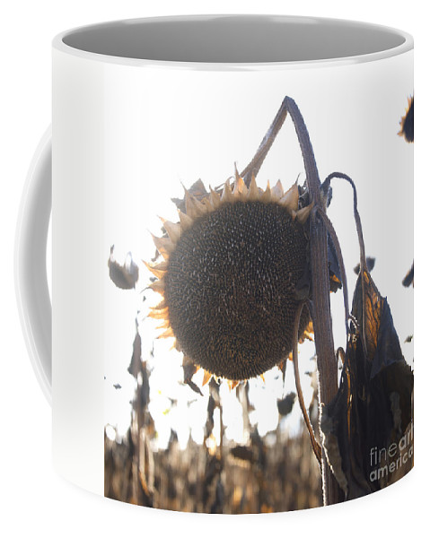 Close-up Coffee Mug featuring the photograph Sunflower by Bernard Jaubert