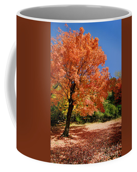 Autumn Coffee Mug featuring the photograph A Blanket Of Fall Colors by Amy Cicconi