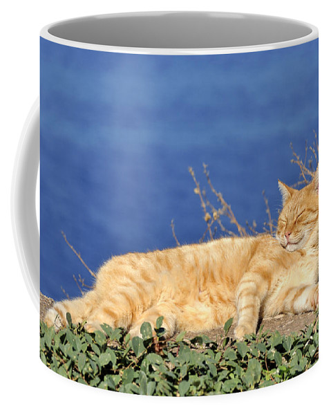 Cat; Cats; Feline; Tabby; Animal; Sleep; Sleeping; Rest; Resting; Free; Alone; Greece; Hellas; Greek; Hellenic; Hydra; Argosaronic; Saronic; Gulf; Islands; Holidays; Island; Vacation; Travel; Trip; Voyage; Journey; Tourism; Touristic; Red; Sea; Sunshine Coffee Mug featuring the photograph Cat In Hydra Island by George Atsametakis