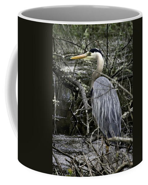 Great Blue Heron Coffee Mug featuring the photograph Great Blue Heron by Betty Depee