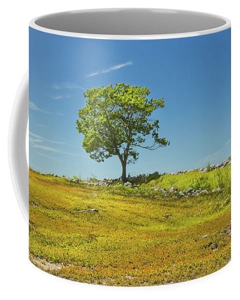 Tree Coffee Mug featuring the photograph Lone Tree With Blue Sky In Blueberry Field Maine by Keith Webber Jr