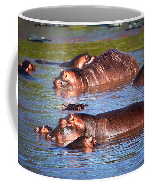 Hippo Coffee Mug featuring the photograph Hippopotamus In River. Serengeti. Tanzania by Michal Bednarek
