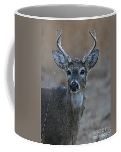 Antlers Coffee Mug featuring the photograph 8 Point Buck by Ken Keener