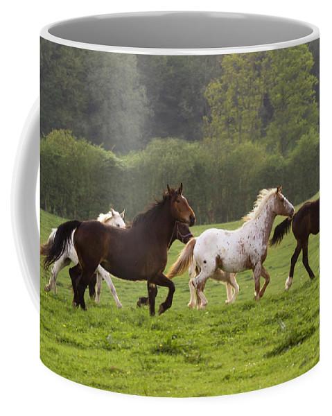 Horse Coffee Mug featuring the photograph Horses On The Meadow by Angel Ciesniarska