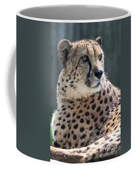 Spots Coffee Mug featuring the photograph Cheetah by Ken Keener
