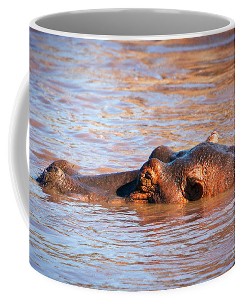 Hippo Coffee Mug featuring the photograph Hippopotamus In River. Serengeti. Tanzania by Michal Bednarek