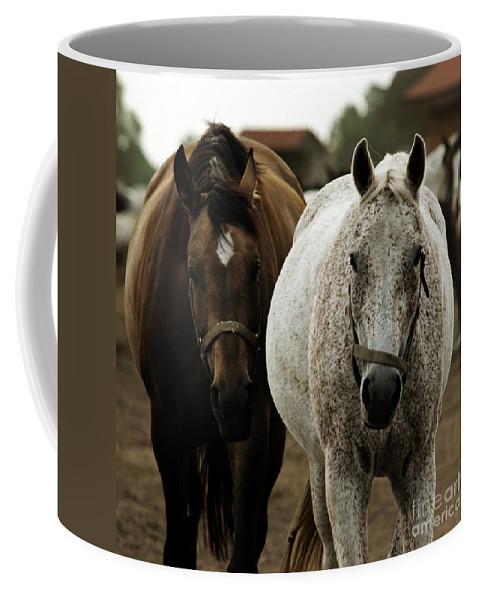 Horse Coffee Mug featuring the photograph Horses by Angel Tarantella