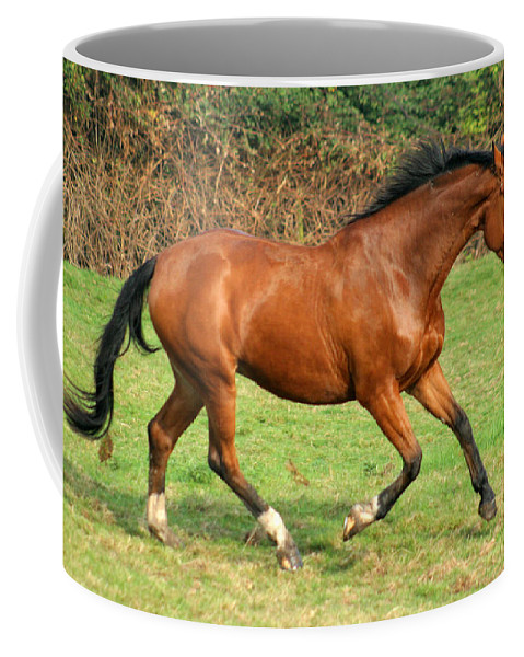 Horse Coffee Mug featuring the photograph The Bay Horse by Angel Ciesniarska