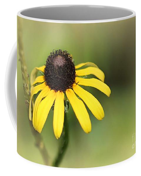 Art Coffee Mug featuring the photograph A Black Eyed Susan by Sabrina L Ryan