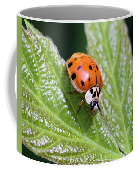 Ladybug Coffee Mug featuring the photograph A Busy Lady by Doris Potter