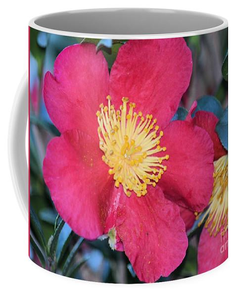 A Christmas Blossom Coffee Mug featuring the photograph A Christmas Blossom by Maria Urso