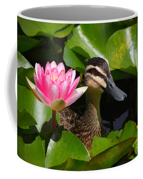 Pink Coffee Mug featuring the photograph A Curious Duck And A Water Lily by Layla Alexander