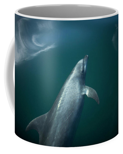 Animals In The Wild Coffee Mug featuring the photograph A Dolphin Swims In The Bay by Chico Sanchez