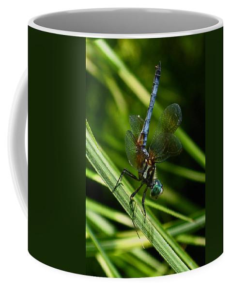 A Dragonfly Coffee Mug featuring the photograph A Dragonfly by Raymond Salani III