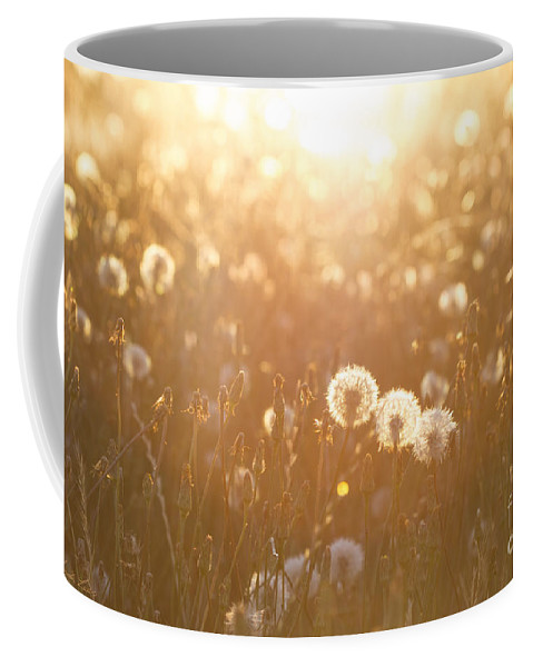 Dandelion Coffee Mug featuring the photograph A Field Of Wishes by Linda Lees