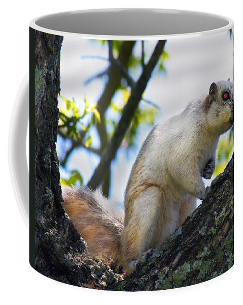 Animal Coffee Mug featuring the photograph A Fox Squirrel Poses by Betsy Knapp