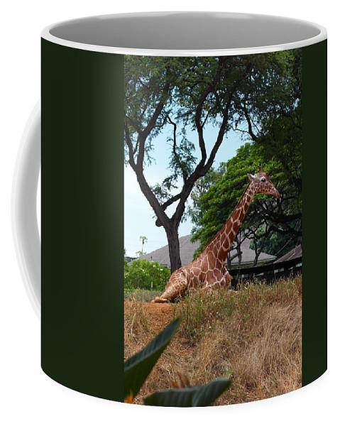 Giraffe Coffee Mug featuring the photograph A Giraffe Rests In Honolulu by Michele Myers