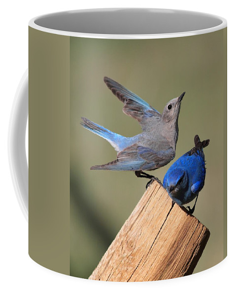 Blue Birds Coffee Mug featuring the photograph A Great Pair by Shane Bechler