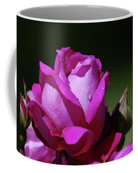 Blue Rose Coffee Mug featuring the photograph A Light Blue Rose by Jeff Swan