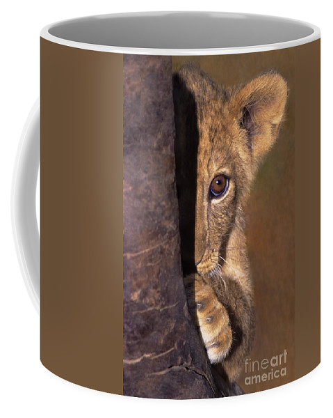African Lion Coffee Mug featuring the photograph A Lion Cub Plays Hide And Seek Wildlife Rescue by Dave Welling