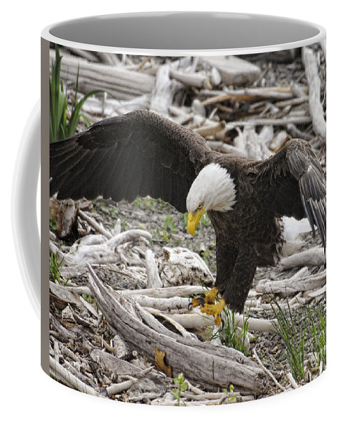 Eagles Coffee Mug featuring the photograph A Little Hop by Claudia Kuhn