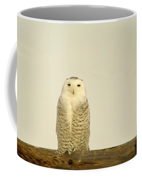 Birds Coffee Mug featuring the photograph A Lone Artic Owl by Jeff Swan