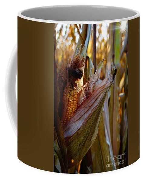 Corn Coffee Mug featuring the photograph A-mazing II by Ivana Kovacic