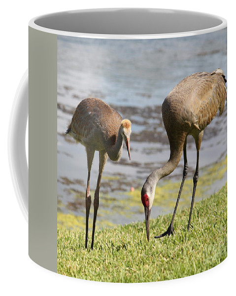 Sandhill Cranes Coffee Mug featuring the photograph A Mother's Lesson by Carol Groenen