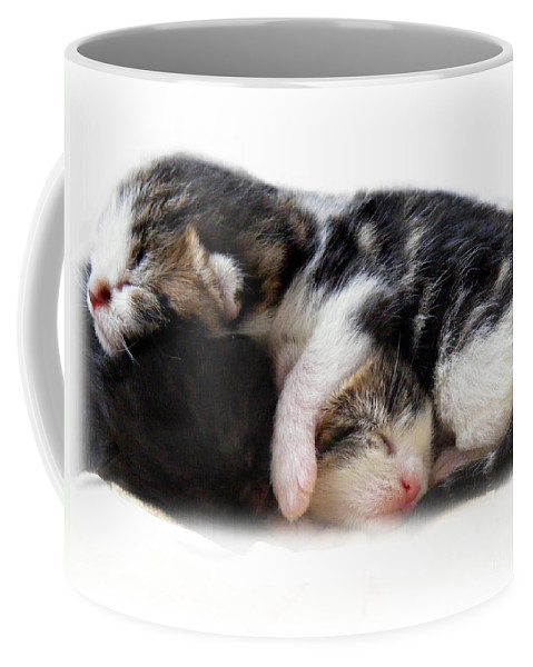 Cat Coffee Mug featuring the photograph A Pile Of Pussies by Linsey Williams