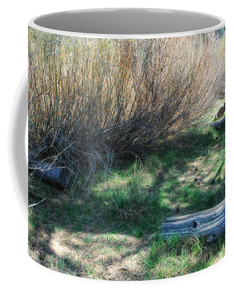 Woods Coffee Mug featuring the photograph A Place To Hide by Donna Blackhall