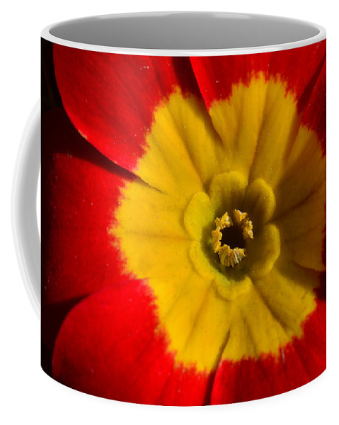 Flower Coffee Mug featuring the photograph A Prim Rose by Donna Blackhall