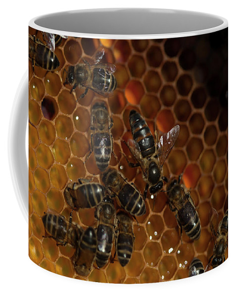 Worker Bees Coffee Mug featuring the photograph A Queen Bee Walks In The Center by Chico Sanchez