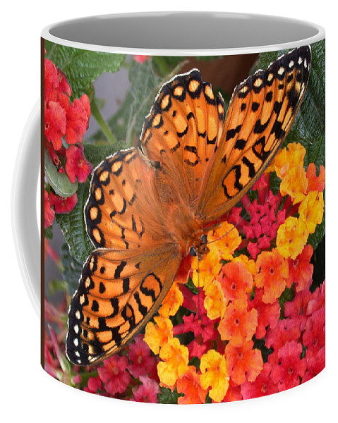 Butterfly Coffee Mug featuring the photograph A Quick Snack by Shane Bechler