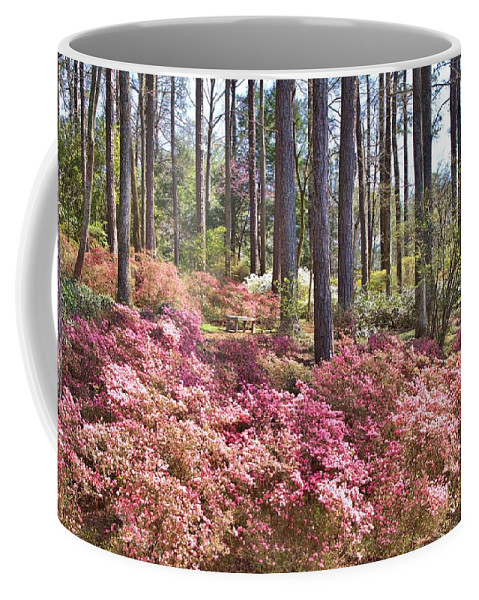8211 Coffee Mug featuring the photograph A Quiet Spot In The Woods by Gordon Elwell