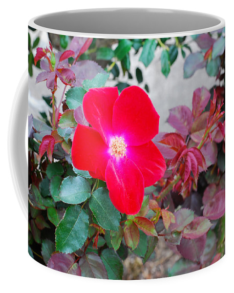 Connie Fox Coffee Mug featuring the photograph A Real Knockout by Connie Fox