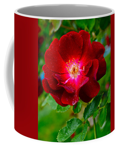 Rose Coffee Mug featuring the photograph A Rose Is A Rose by Frozen in Time Fine Art Photography