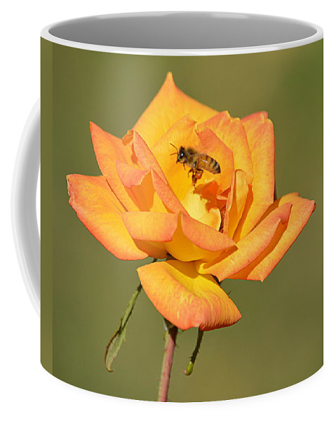 Flowers Coffee Mug featuring the photograph A Rosy View by AJ Schibig