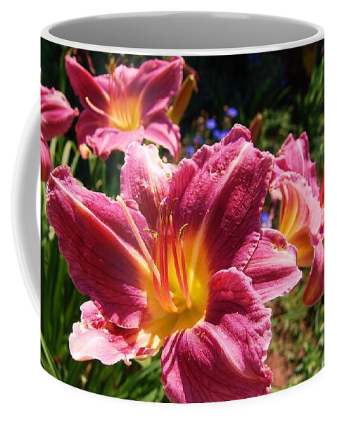 Lilies Coffee Mug featuring the photograph A Splash Of Lilies by Jane Harris